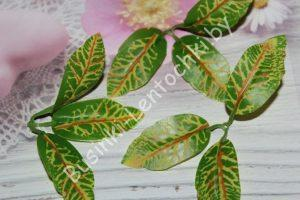 Розетка листиков (7см) кротона
